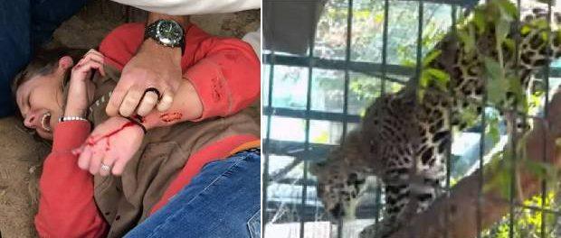 Un jaguar a atacat o femeie care dorea să-și facă un selfie cu el