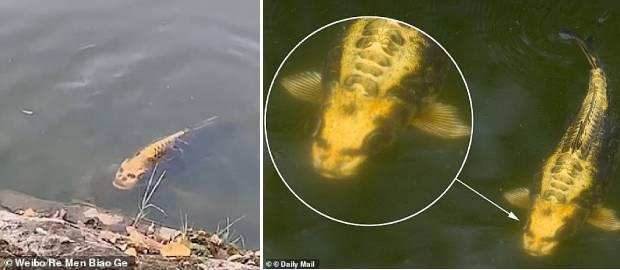 """Un pește cu """"FAȚĂ DE OM"""" a fost filmat într-un lac dintr-o locație turistică din China"""