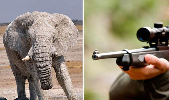 Doi vânători au fost atacati de elefanti după ce au impuscat un mascul