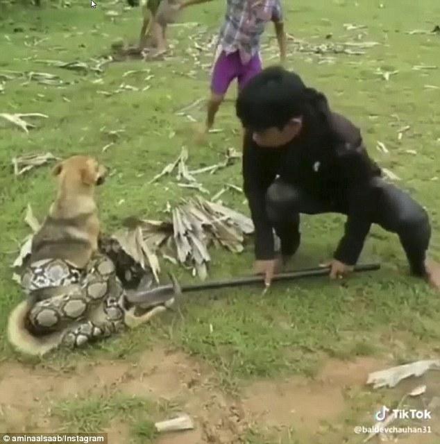 Trei copii salveaza un câine din strânsoarea unui sarpe