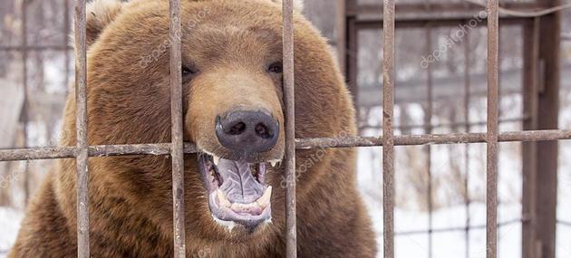 Un urs brun a smuls bratul unei femei și l-a mâncat în Rusia