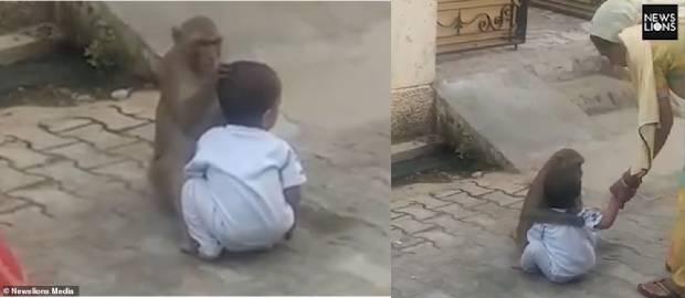 Maimuța care a răpit un copil pentru a se juca cu el