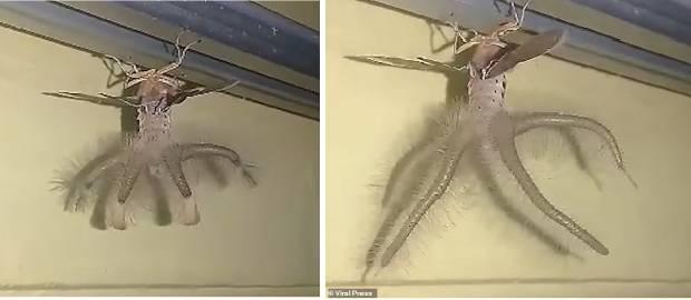 Creatură înfricoșătoare filmată de un bărbat în casa sa
