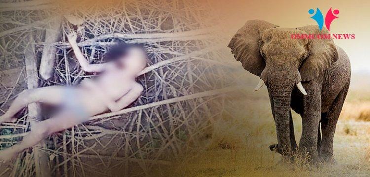 Un elefant a smuls cu trompa o fată de șapte ani din patul ei și a ucis-o