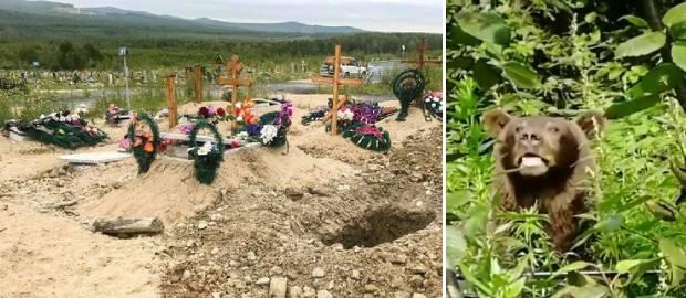 Un urs a dezgropat mortul dintr-un mormânt și l-a devorat