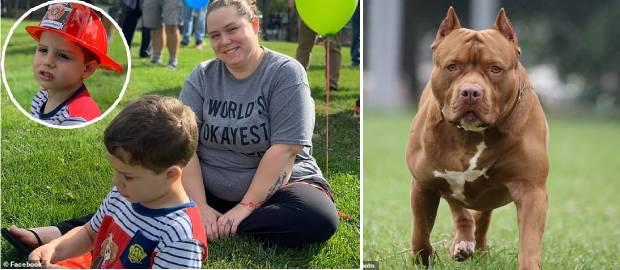 Băiețel de patru ani ucis de un pitbull în ciuda eforturilor disperate ale mamei sale
