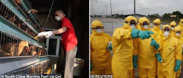 China lovită și de un focar de gripă aviară aproape de Wuhan