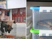 Piețele umede care vând lilieci, câini și șerpi au fost redeschise în Asia de Sud-Est