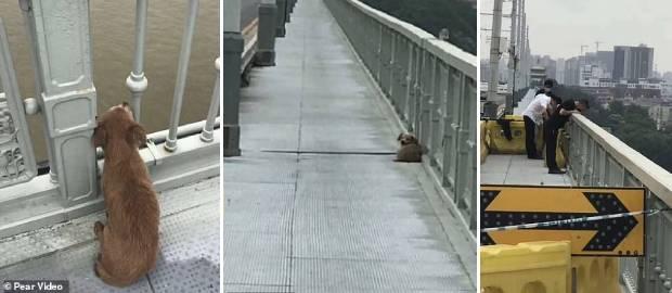 Un câine loial și-a așteptat patru zile stăpânul pe podul de pe care acesta s-a sinucis
